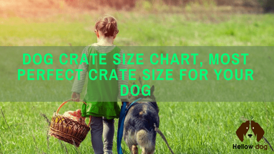 Dog Crate Size Chart To Fit Your Puppy