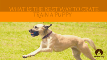 What is The Best Way to Crate Train a Puppy