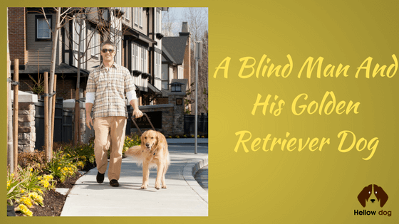 A Blind Man and His Golden Retriever Dog