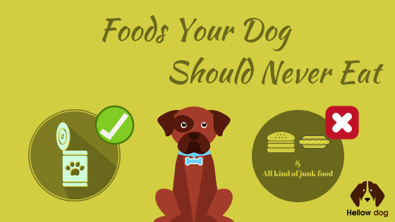Foods Your Dog Should Never Eat