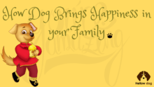 How Dog Brings Happiness in Your Family