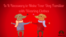 Is It Necessary to Make Your Dog Familiar with Wearing Clothes