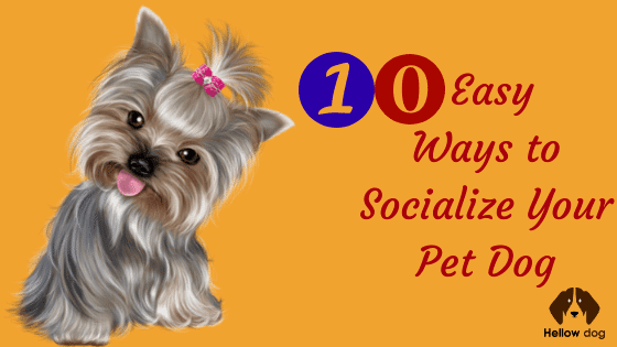 10 Easy Ways to Socialize Your Pet Dog