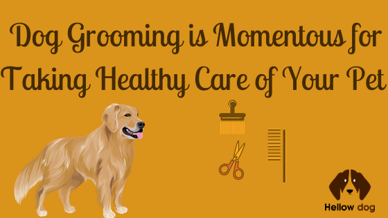Dog Grooming is Momentous for Taking Healthy Care of Your Pet Dog
