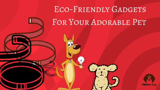 Eco-Friendly Best Dog Gadgets