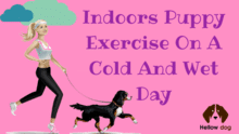 Indoors Puppy Exercise on A Cold and Wet Day