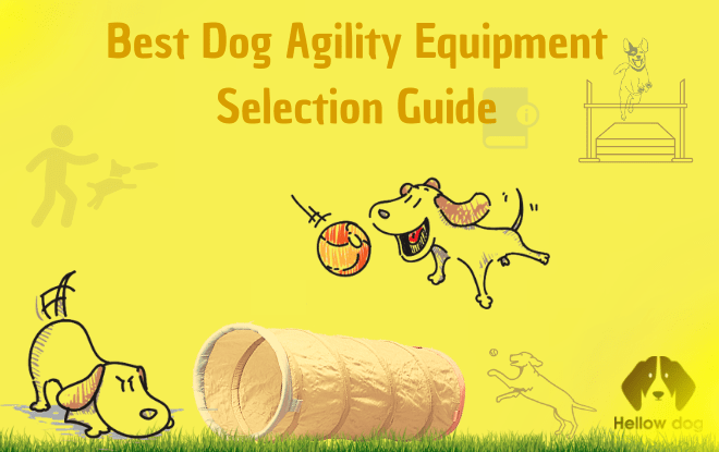 Best Dog Agility Equipment