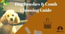 Best Dog Brushes & Comb