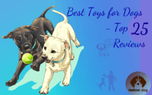 Best Toys for Dogs – Top 25 Reviews
