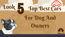 Look 5 Top Best Cars for Dog and Dog Owners