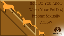 How Do You Know When Your Pet Dog Becomes Sexually Active