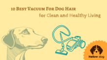 10 Best Vacuum For Dog Hair for Clean and Healthy Living