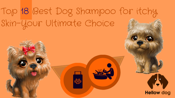 Best Dog Shampoo for Itchy Skin