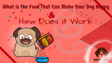 Food That Can Make Your Dog Happy