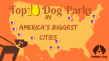 Top 10 Dog Parks in America's Biggest Cities