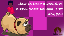 how to help a dog give birth