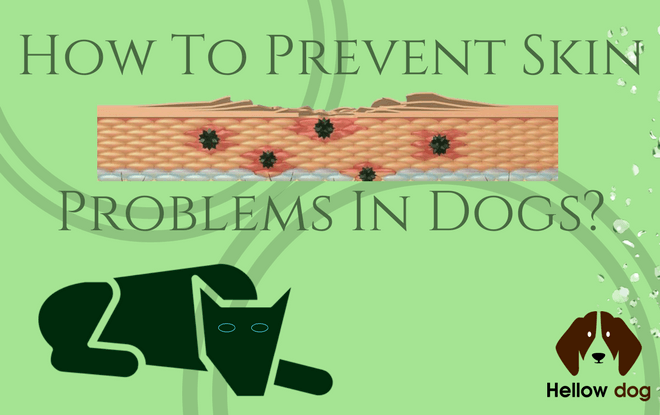 How to Prevent Skin Problems in Dogs
