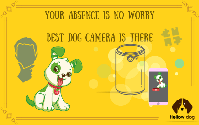 Your Absence is No Worry – Best Dog Camera is There