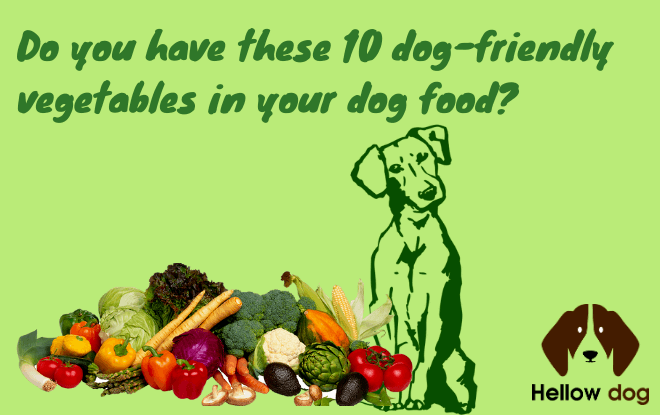 Do You Have these 10 Dog-Friendly Vegetables in Your Dog Food