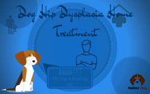 Dog Hip Dysplasia