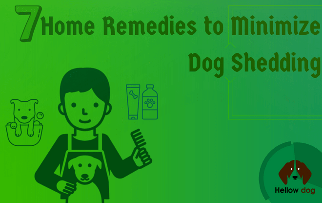 Home Remedies to Minimize Dog Shedding