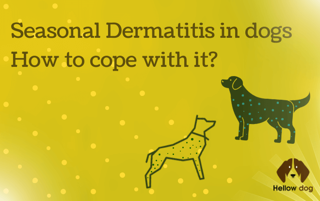 Seasonal Dermatitis in Dogs Hоw to Cope With Іt