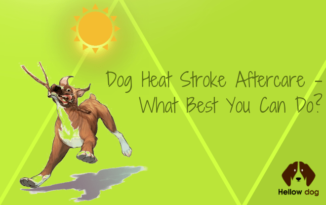 Dog Heat Stroke Aftercare
