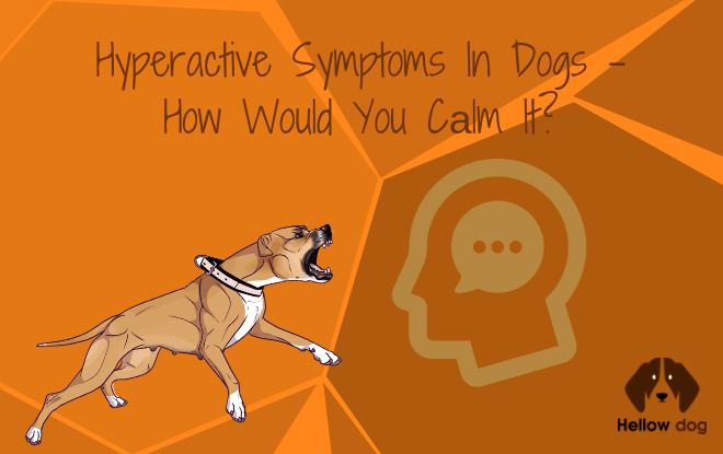 Hyperactive Symptoms In Dogs