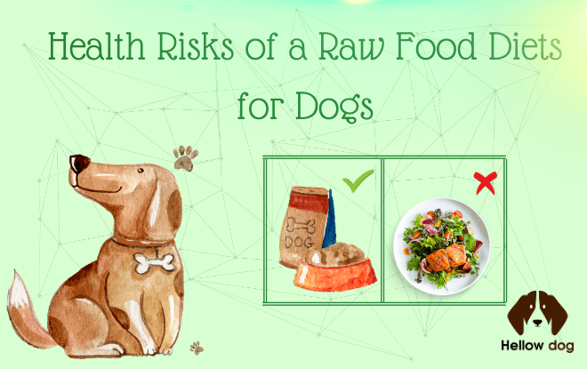 Health Risks of a Raw Food Diets for Dogs