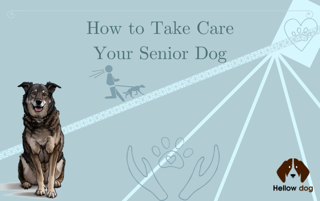 How to Take Care of Your Senior Dog