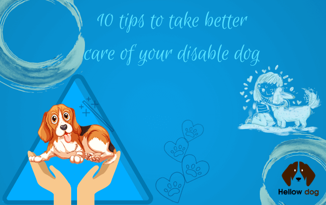 10 Tips Concerning Disabled Dog Care