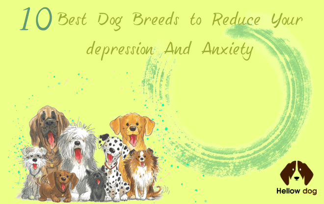 Best Dоg Breeds tо Reduce Your Dерrеѕѕіоn