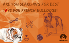 Best Toys for French Bulldogs