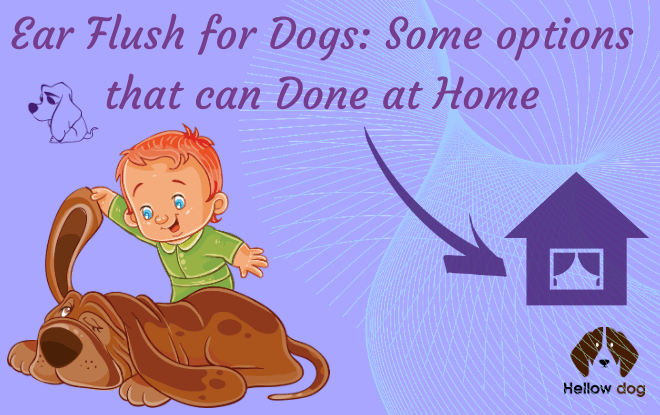 Ear Flush for Dogs Some options that can Done at Home
