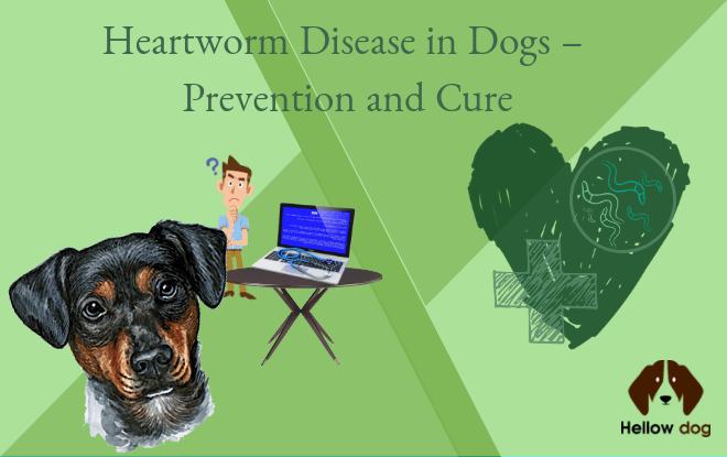 Heartworm Disease in Dogs ÔÇô Prevention and Cure