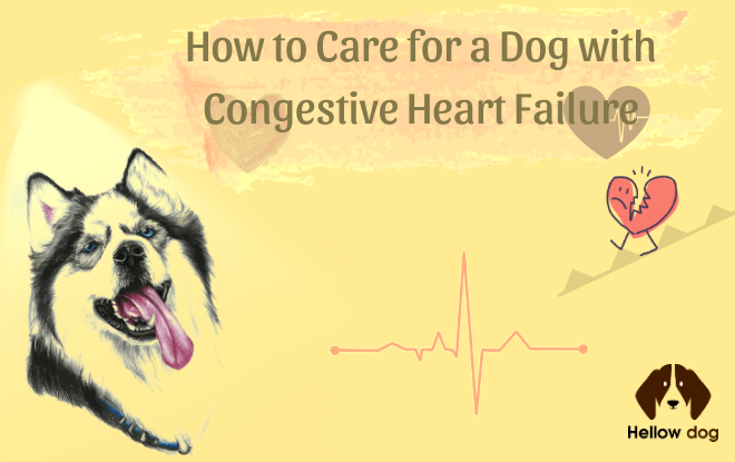 How to Care for a Dog with Congestive Heart Failure