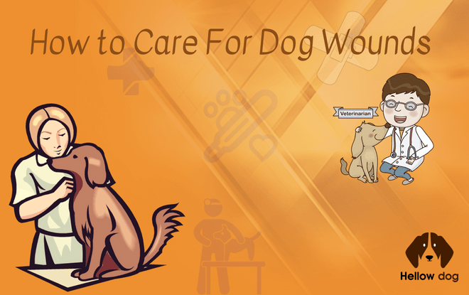 How to Care For Dog Wounds