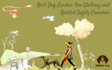 Best Dog Leashes For Walking