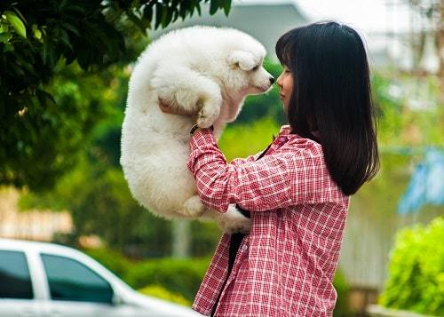 psychological benefits of owning a pet