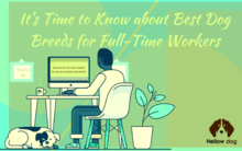 Best Dog Breeds for Full-Time Workers