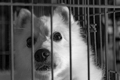 dog inside a cage