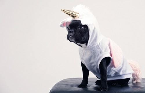 dogs in clothes