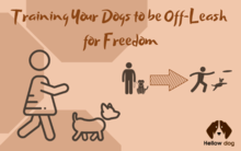 Training Your Dogs to be Off-Leash