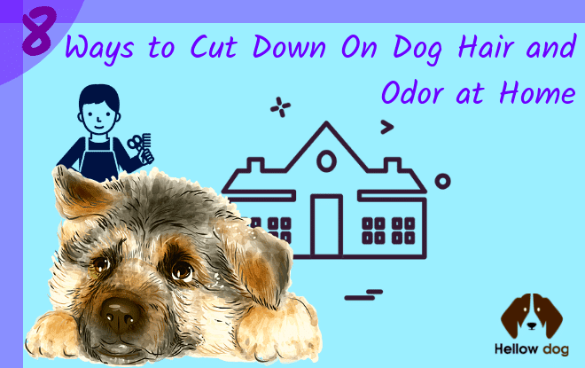 how to get rid Dog Hair and Odor at Home