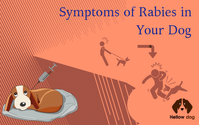 rabies in dogs symptoms