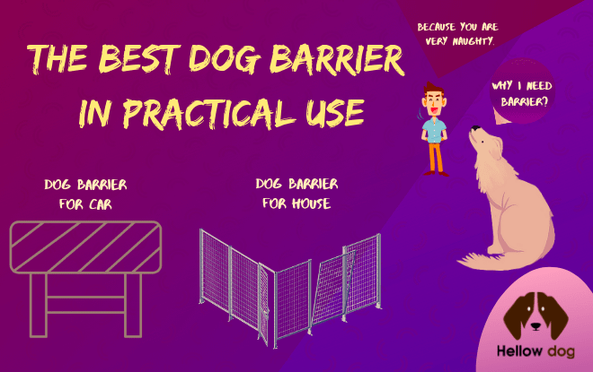 Best Dog Barrier