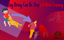 Dog Biting Can Be Stopped with Training