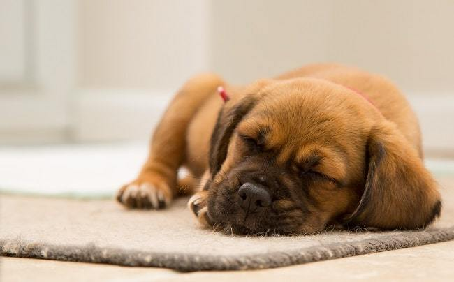 Sleeping More Than Usual or Apparent Changes in Behavior