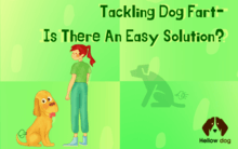 Tackling dog fart- Is there an easy solution