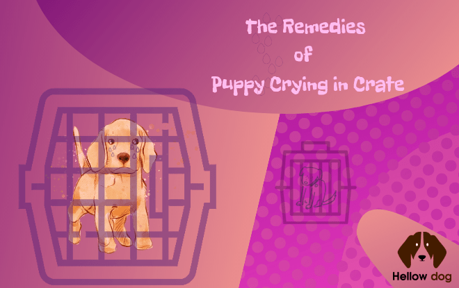 The Remedies of Puppy Crying in Crate